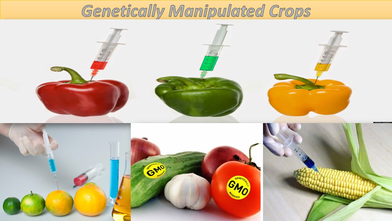 a research on the genetic engineering of food products Genetically modified food, crops and gmo issues read current science articles on genetic engineering including mice with glowing hearts, disease-resistant mosquitos.
