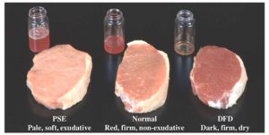 Chemical and Physical Properties of Meat