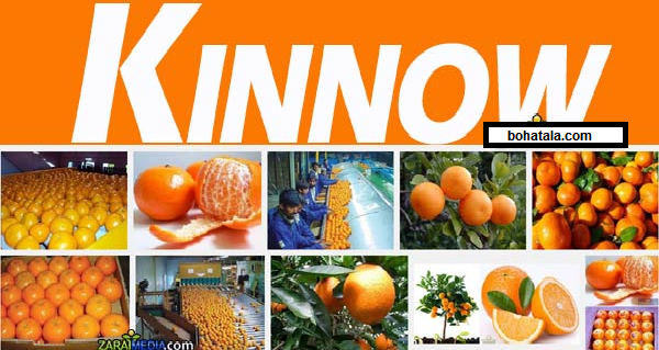 DEVELOPMENT OF KINNOW VARIETIES