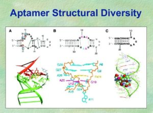 In Silico Selection in relation to Aptamer, Based on Computational Docking