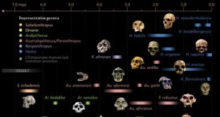 Trends and Analysis of Hominid Evolution
