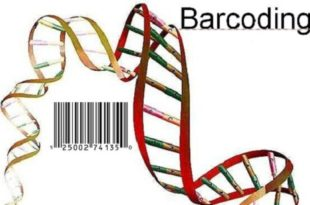 DNA Barcoding Database Development
