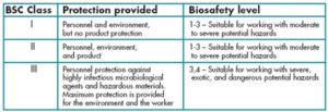 Colony Morphology