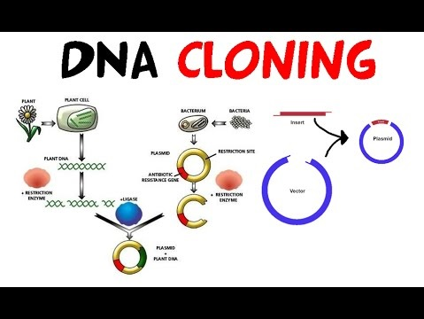 gene cloning research papers An overview of information about cloning and embryonic stem cell research from the july 2002 ethical  additional background papers:  cloning/embryonic stem cells.