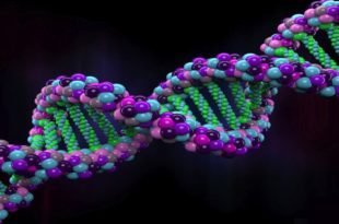 EVOLUTION OF HUMAN GENOME AND HUMAN BEINGS