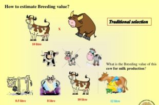 How To Calculate Breeding Value