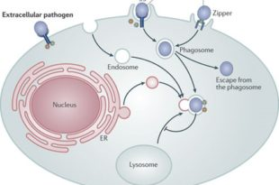 The Mechanisms of Bacterial Pathogenicity