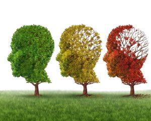 Effect of Alzheimer's Disease on The Brain
