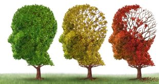 Effect Of Alzheimer's disease On Brain