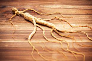 Panax Ginseng Benefits