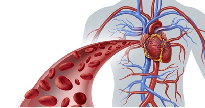 Image result for circulatory system