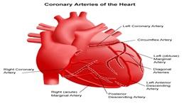 Blood circulatory system