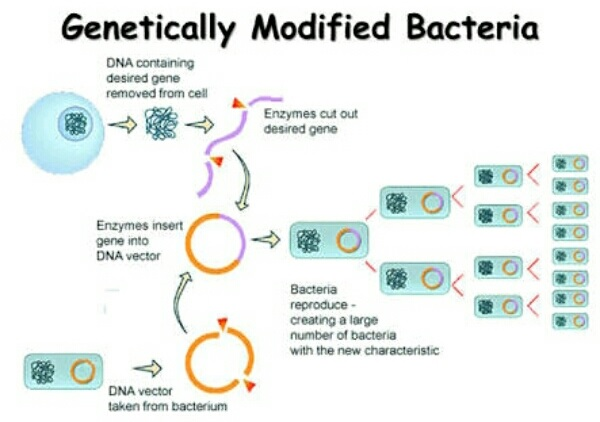 Benefits and harmful effects of Genetics on the modern world