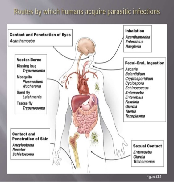 Parasitic Infection