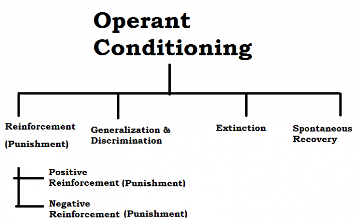 Operant Conditioning in Psychology