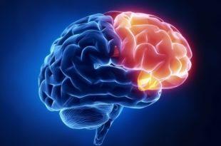 Neuro Rehabilitation Research Paper