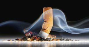 Smoking Essay Example