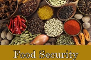 Food Security and Grain Import in Sub Saharan Africa
