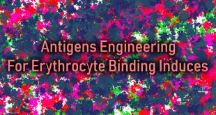 Antigens Engineering For Erythrocyte Binding Induces