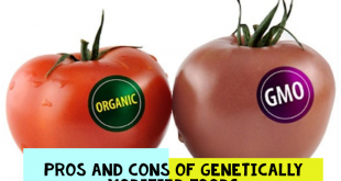 Pros and Cons of Genetically Modified Foods