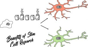 Benefits of Stem Cell Research