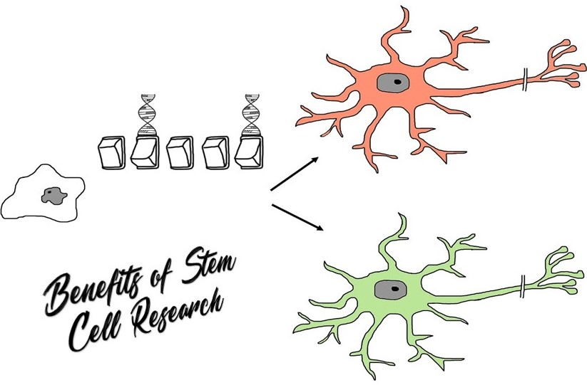 Advantages and Benefits of Stem Cell Research