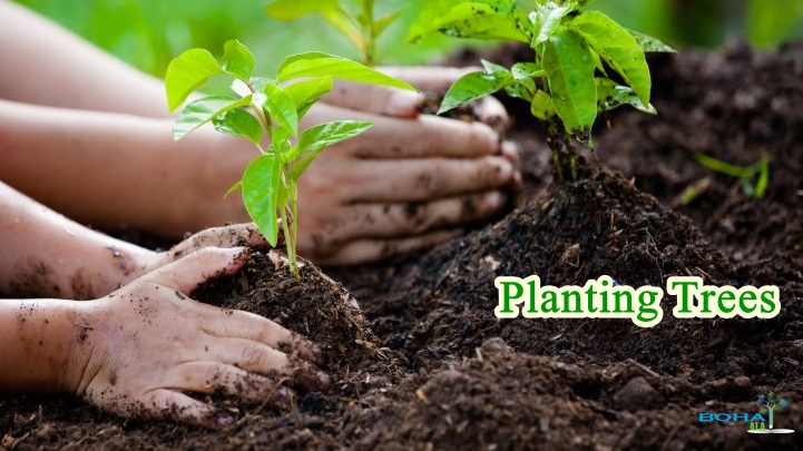 Importance of Planting Trees