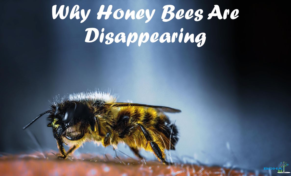 Why Honey Bees Are Disappearing