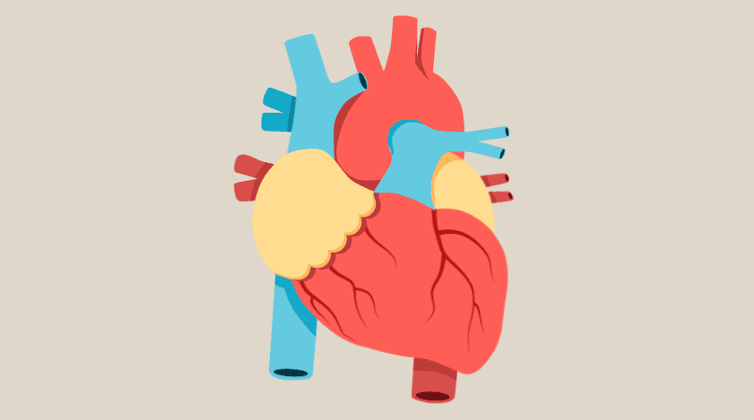 Myocardial Infarction Treatment Options