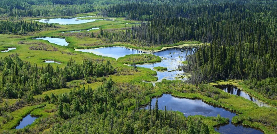 Boreal Forest Conservation in Canada