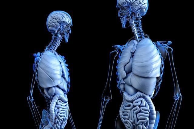 The Life Saving Benefits of Organ Donation