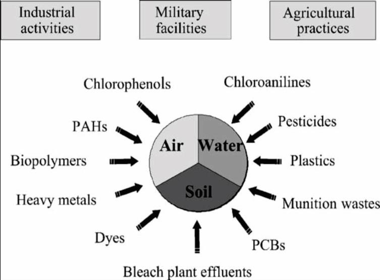 Bioremediation of Organic Pollutant