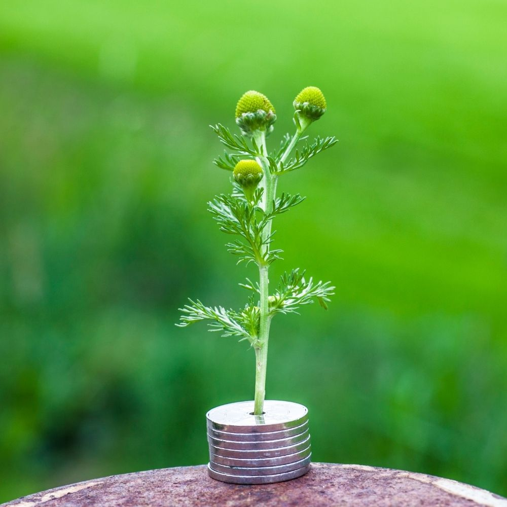 Growth Yield and ROI